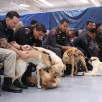 Agentes da polícia tailandesa participam de cerimônia de graduação ao lado de cães em Front Royal, na Virgínia. - Foto: EFE