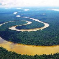 Geraldo Lino - O que todo o mundo (brasileiros inclusive) precisam saber sobre a Floresta Amazônica