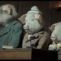 A mídia, a opinião pública e os porcos!