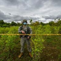 (2020) Soldado vigia plantação de coca na cidade colombiana de Tumaco