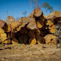 Todas as atividades ocorrem em conjunto com órgãos e agências de proteção ambiental e segurança pública - Crédito: Cb Dos Anjos